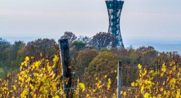 Vinarium-stolp©Shutterstock
