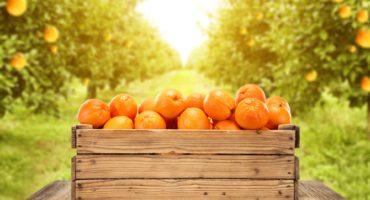 mandarine©Shutterstock-2