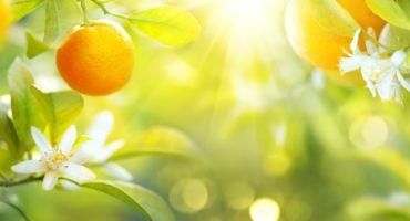 mandarine©Shutterstock
