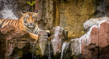 Safari-park-shutterstock_1144268237