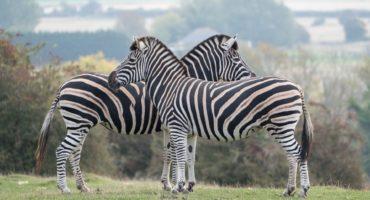 Safari-park-shutterstock_1206011539