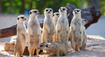 Safari-park-shutterstock_307505138