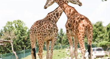 Safari-park-shutterstock_95663674